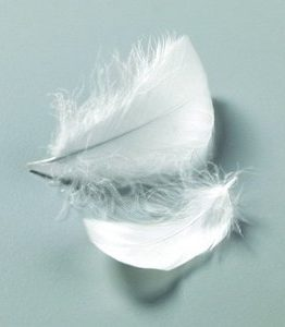 Billigtpyssel.se | Dekorfjädrar 50-100 mm - 10 g/110 st