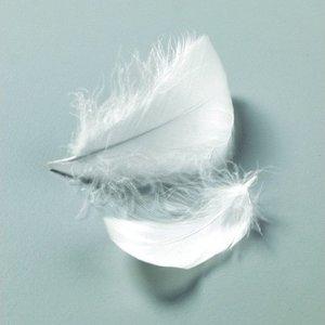 Billigtpyssel.se   Dekorfjädrar 50-100 mm - 10 g/110 st