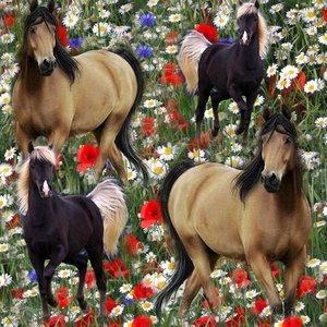 Billigtpyssel.se   Mönstrad Trikå 150 cm - Vallmo Hästar