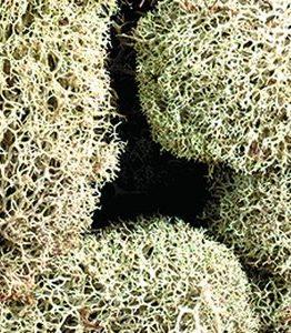 Billigtpyssel.se | Vitmossa (lav) - naturlig